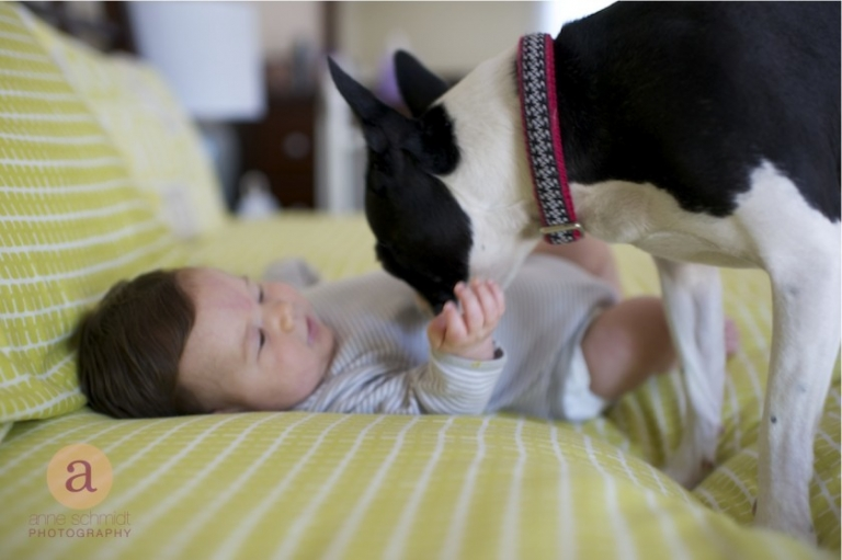 baby playing with boston terrier on bed