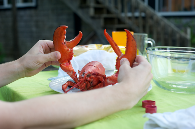 playing with the lobster