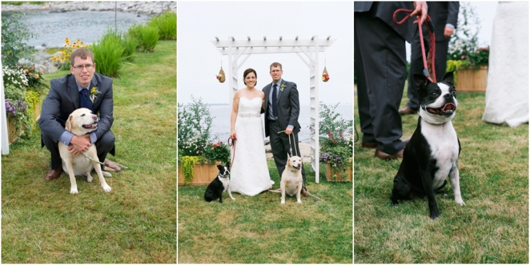 Maine wedding with dogs